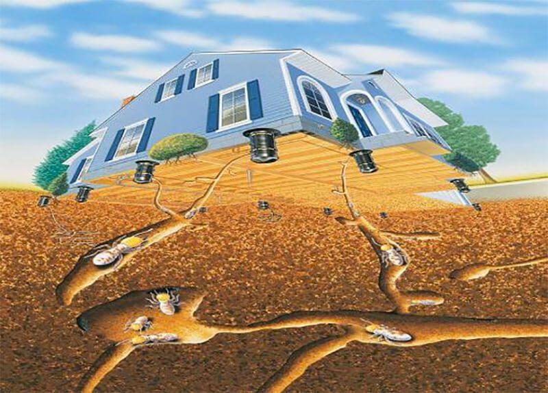 Mối đục khoét nền móng nhà gây hư hại nặng