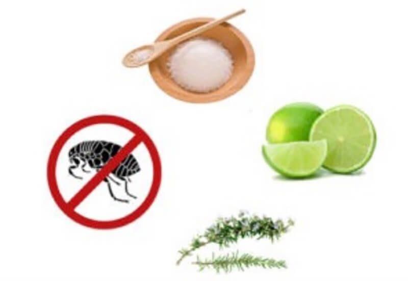 Cách pha hỗn hợp nước chanh diệt bọ chét