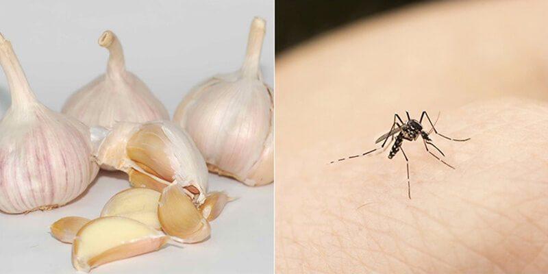 Hạnh Long chia sẻ cách diệt muỗi bằng tỏi