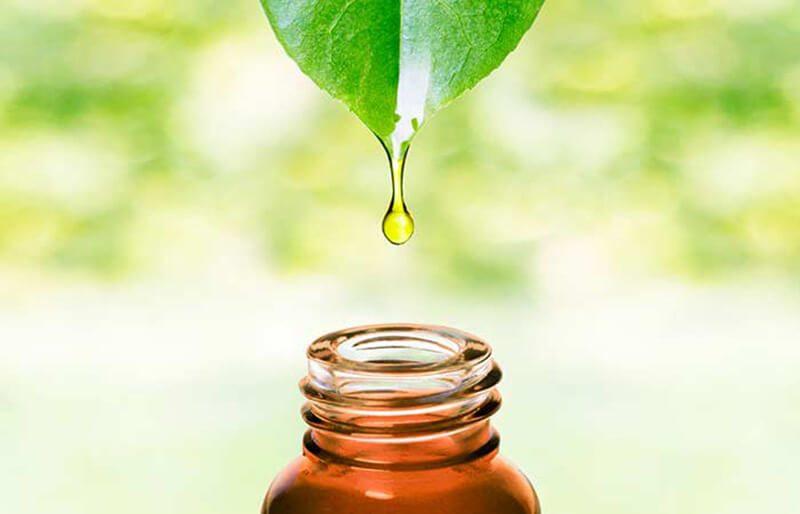 Tinh dầu cây trà